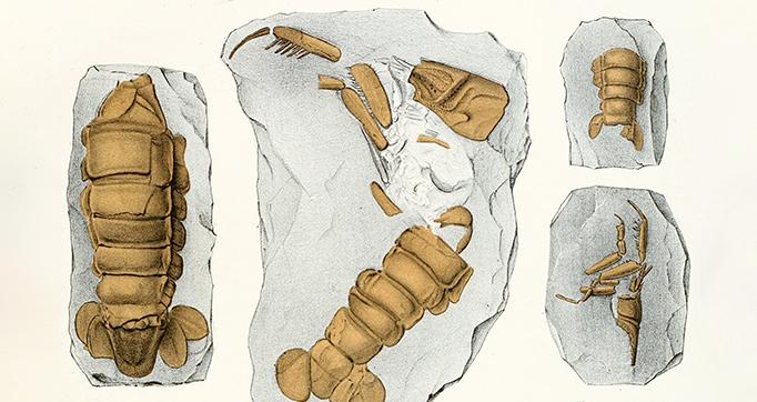 Die crustaceen der böhmischen kreideformation