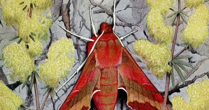 Les Papillons dans la nature