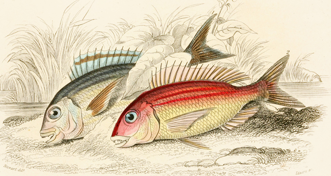 The natural history of British fishes
