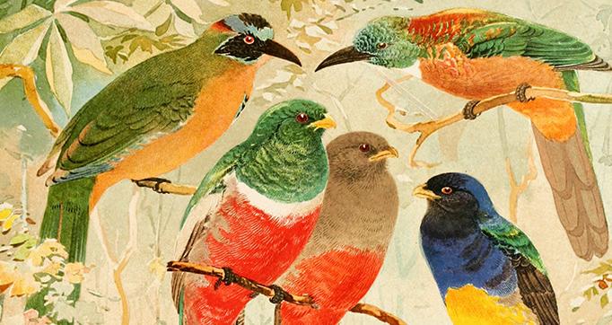 Album de aves amazonicas