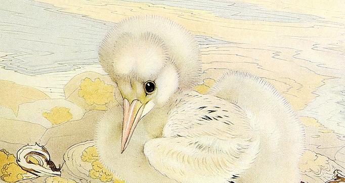 Book of baby birds