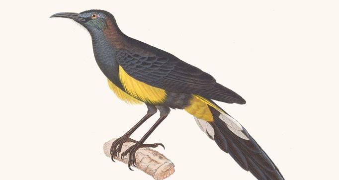 Nouveau recueil général de planches peintes d'oiseaux