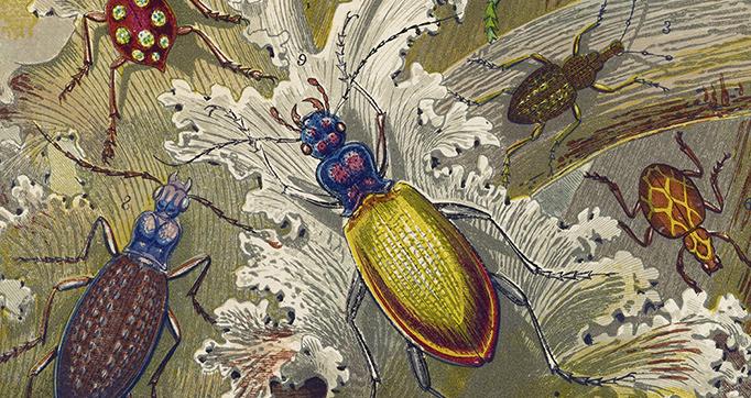 Curiosities of Entomology