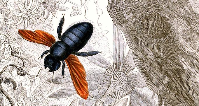 Histoire naturelle iconographique des insectes