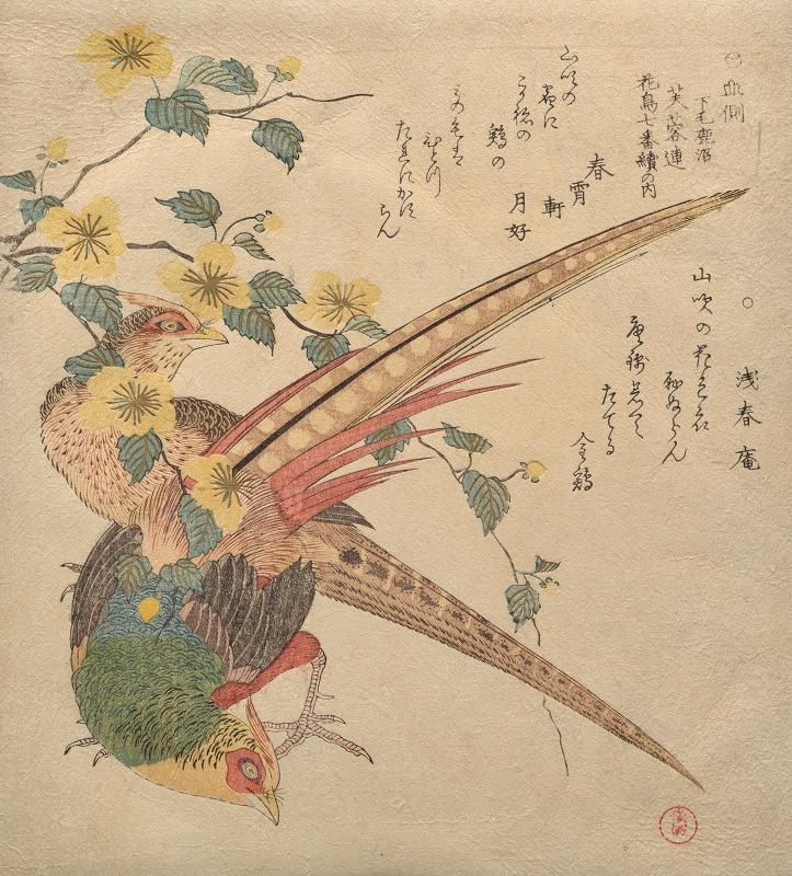Kubo Shunman - Pair of Chinese pheasants and a branch of yamabukiflowers