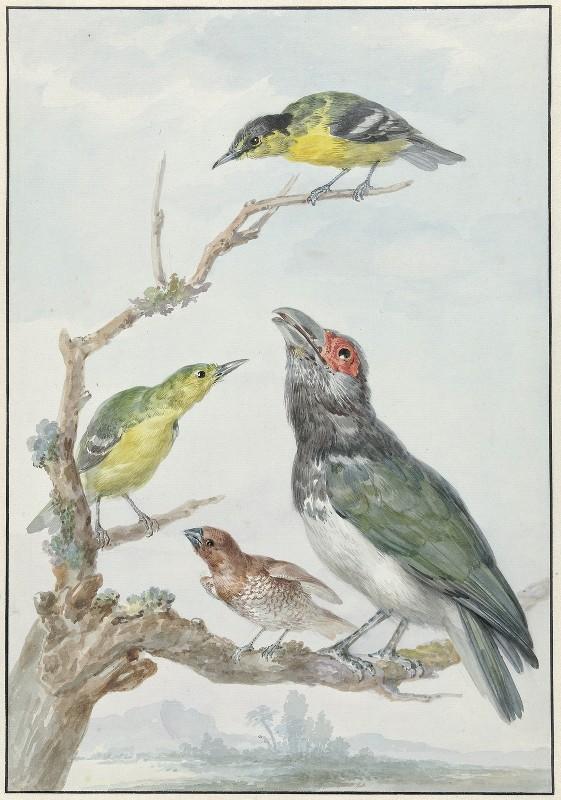 Aert Schouman - Four Different Birds on a Branch