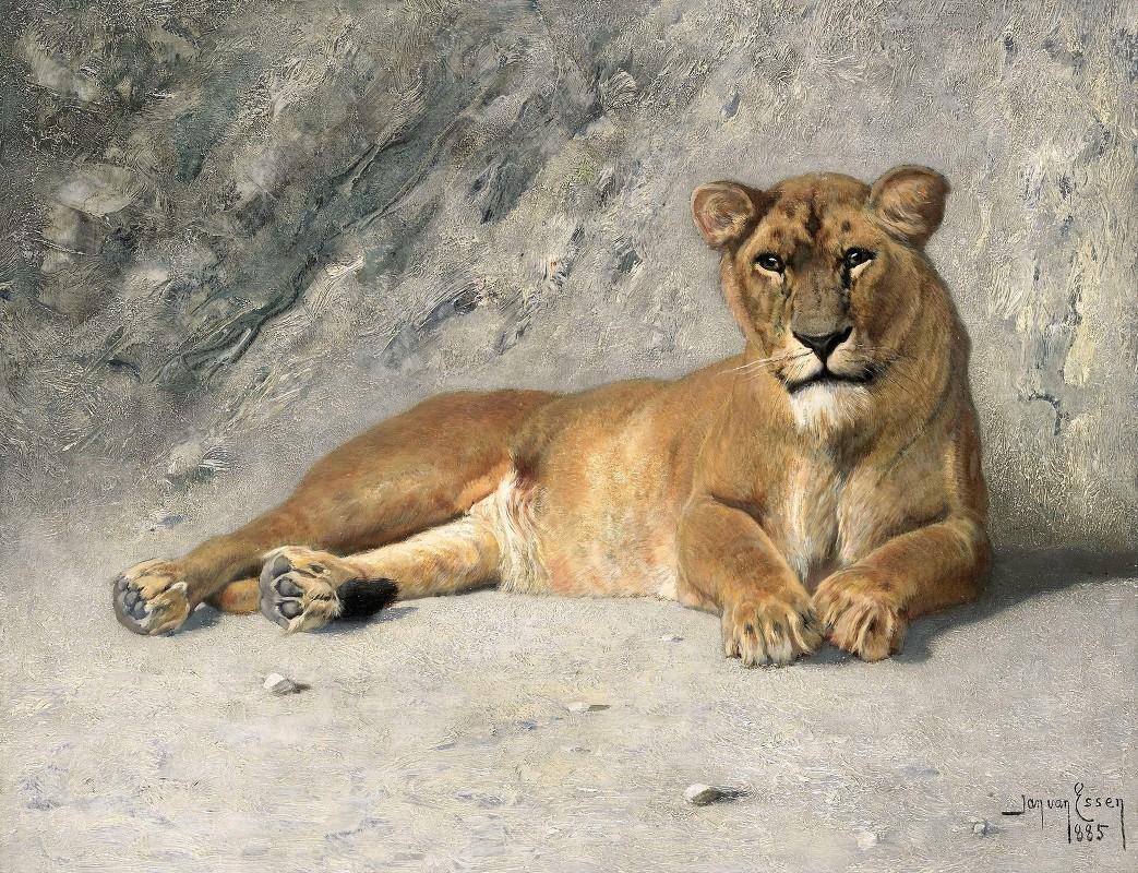 Jan van Essen - Lioness Resting