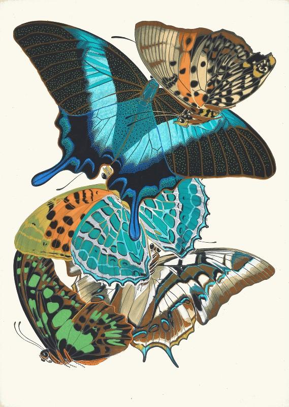 Emile-Allain Séguy - Papillons, Pl. 13