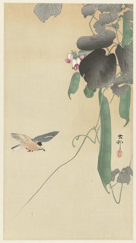 Ohara Koson - Bird at flowering bean plant