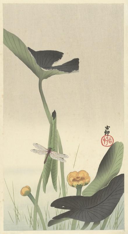 Ohara Koson - Dragonfly and lotus