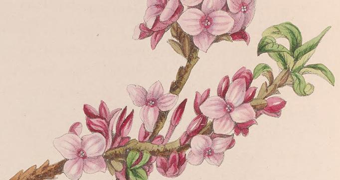 Le bouquet des souvenirs: a wreath of friendship